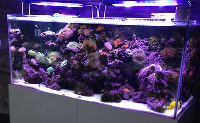 aquarium fish tank maintenance
